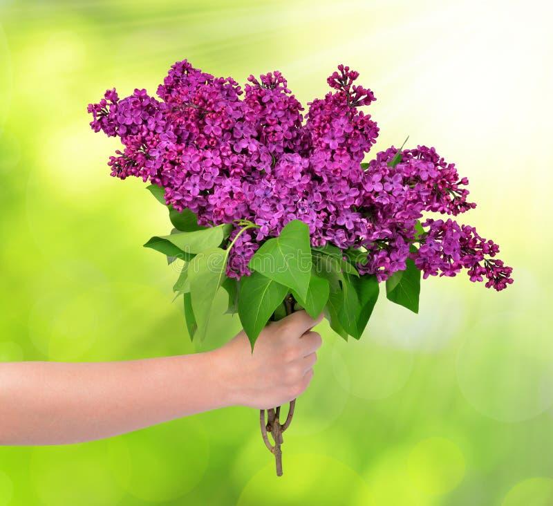 Blühende lila Blumen in der Hand lizenzfreie stockfotografie