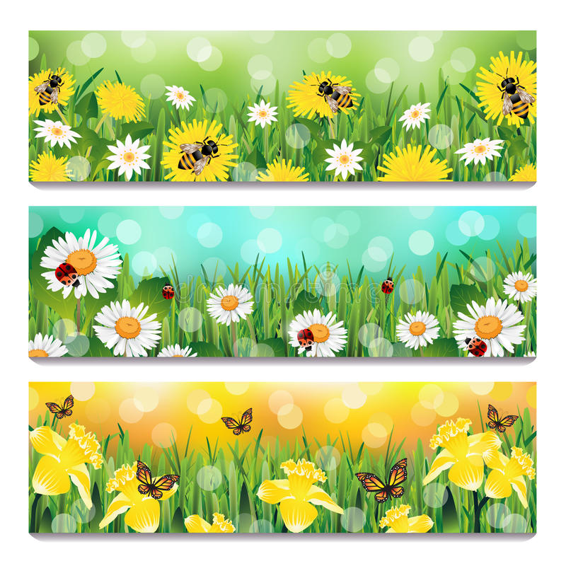 Blühende Magnolie und Kirsche vektor abbildung