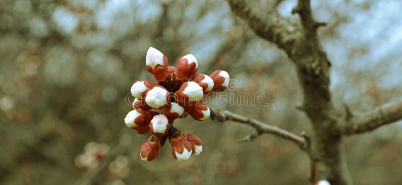 Blühende Niederlassung eines Baums lizenzfreie stockfotografie