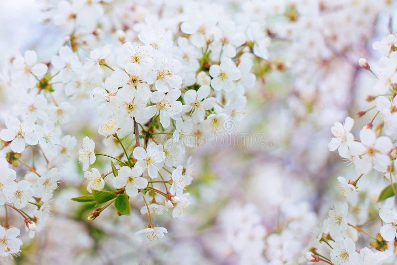 Blühende Niederlassung mit weißen Blumen lizenzfreie stockfotografie