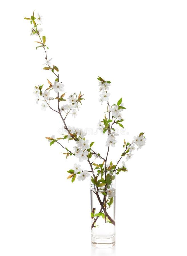 Blühende Niederlassungen der Kirsche stockfotos