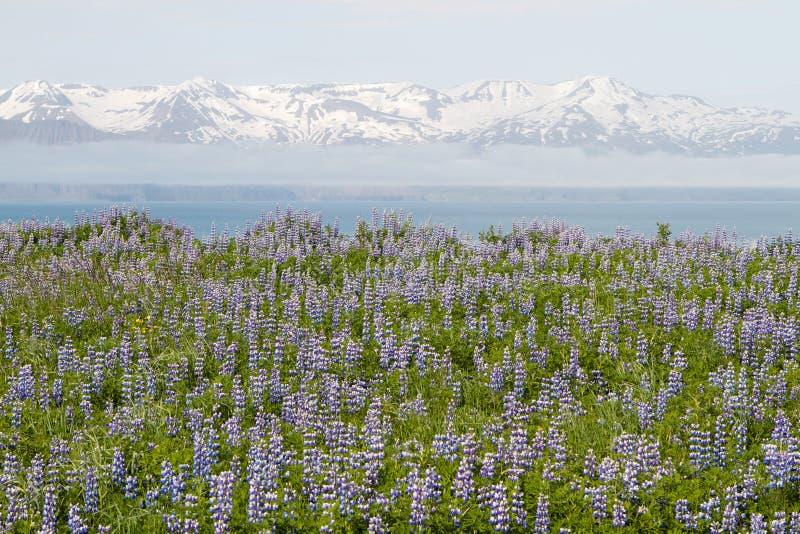 Blühende purpurrote Blume lizenzfreie stockbilder