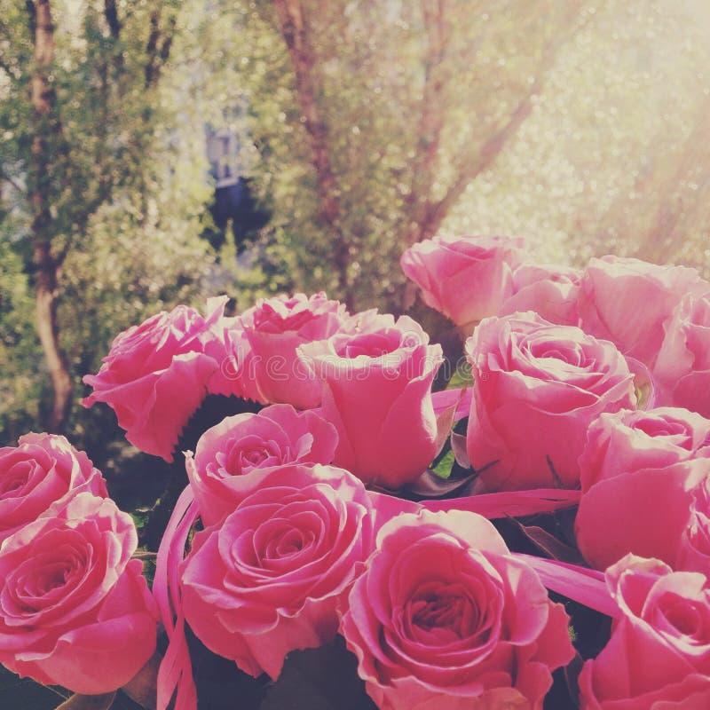 blühende rosafarbene Blumen - Hochzeit, Feiertag und Blumengarten angeredetes Konzept stockfoto