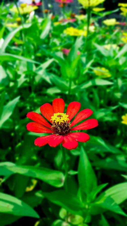 Blühende rote Blume lizenzfreies stockbild