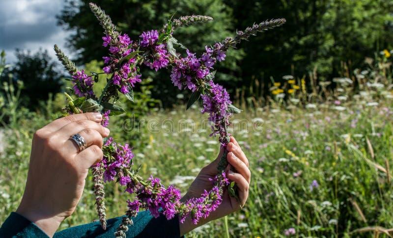 Blühende schöne bunte wilde Blumen krönen in der Ansicht lizenzfreie stockfotos