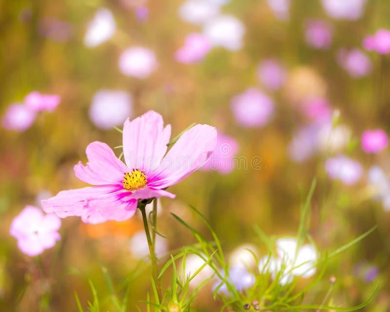 Blühende Sommerwiese lizenzfreies stockbild