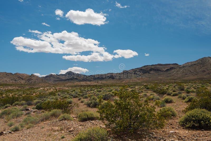 Blühende Wüste nahe Tal des Feuer-Nationalparks, Nevada stockfoto