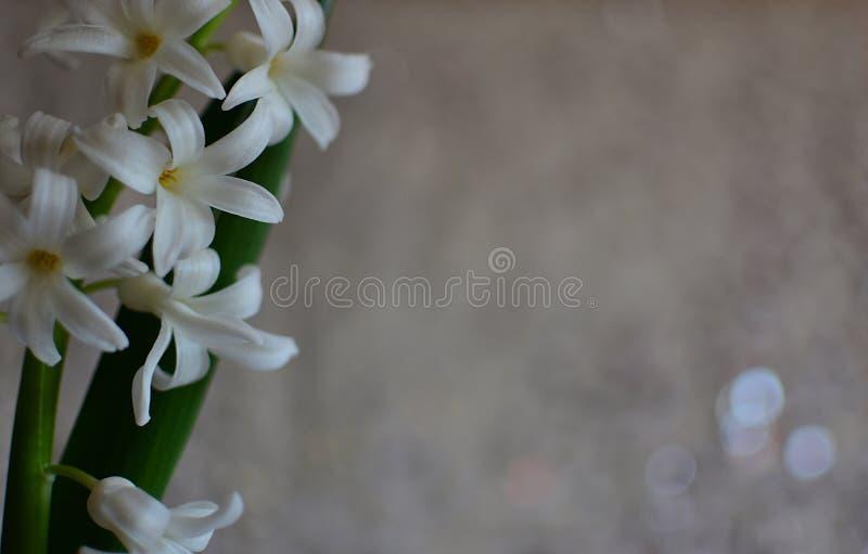 Blühende Weiße Blumen Der Frühlingshyazinthen Stockbild - Bild von ...