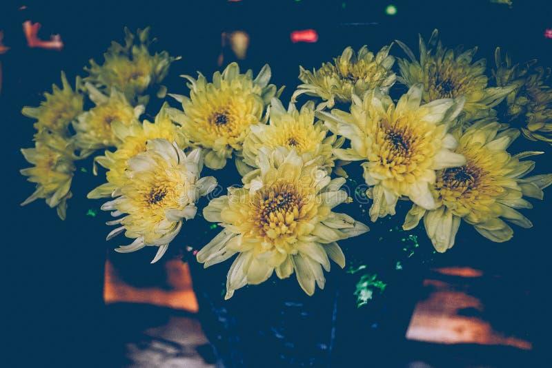 Blühende Weinleseblumen, Gelbblumen stockfoto