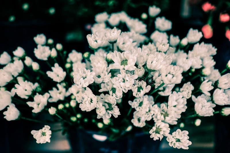 Blühende Weinleseblumen, weiße Blumen lizenzfreie stockfotografie