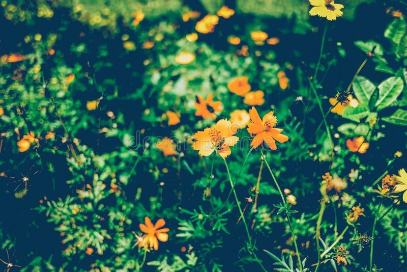 Blühende Weinleseblumen, weiße Blumen stockfoto