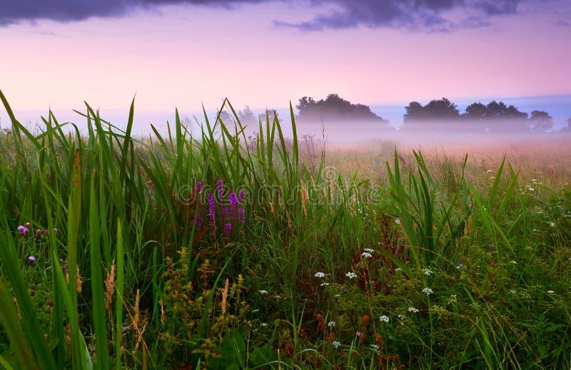 Blühende Wiese im Nebel lizenzfreies stockbild
