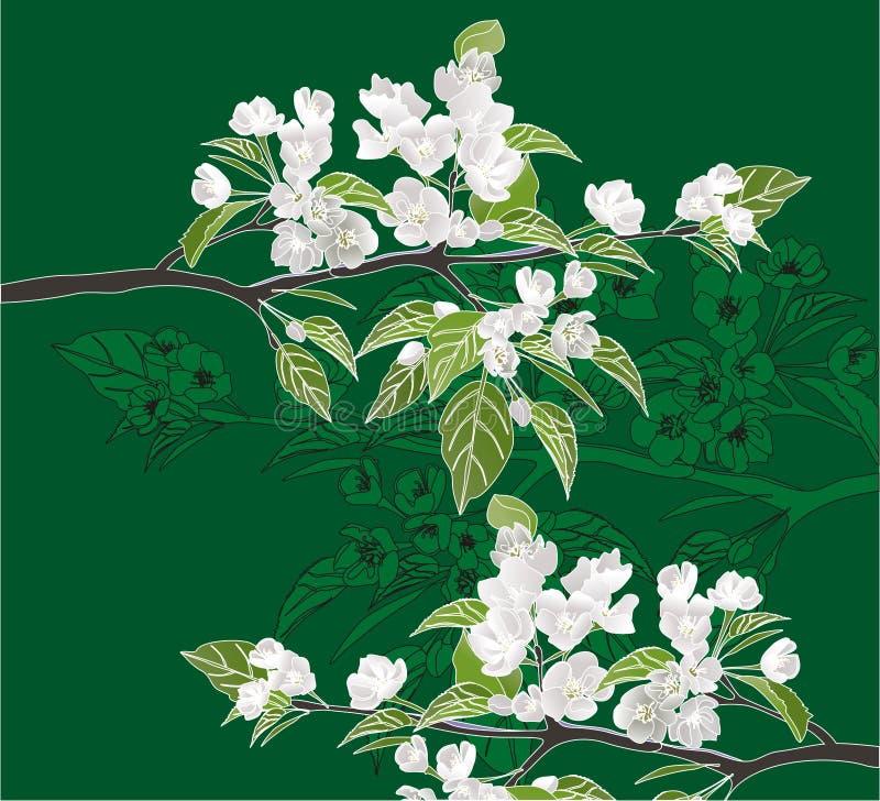 Blühende Zweige lizenzfreie abbildung