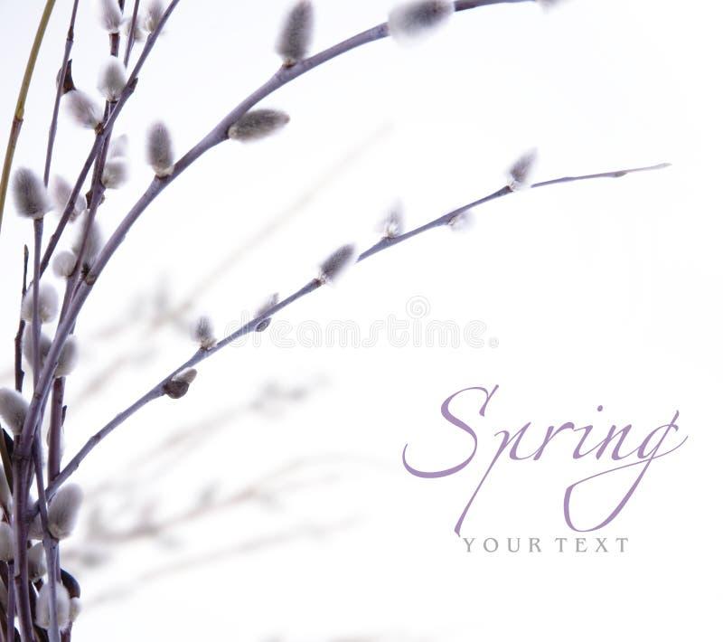 Blühende Zweige des Kunstfrühlinges der Weide lizenzfreies stockfoto