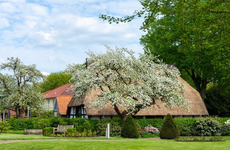 Blühender Apfelbaum vor einem Bauernhaus mit einem mit Stroh gedeckten ro lizenzfreie stockfotografie