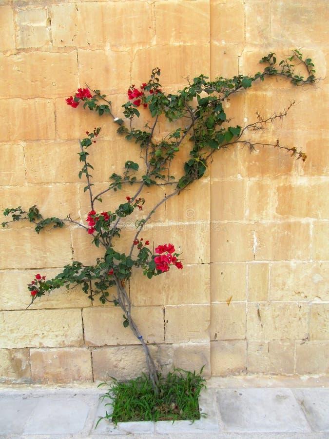 Blühender Baum stockfotos