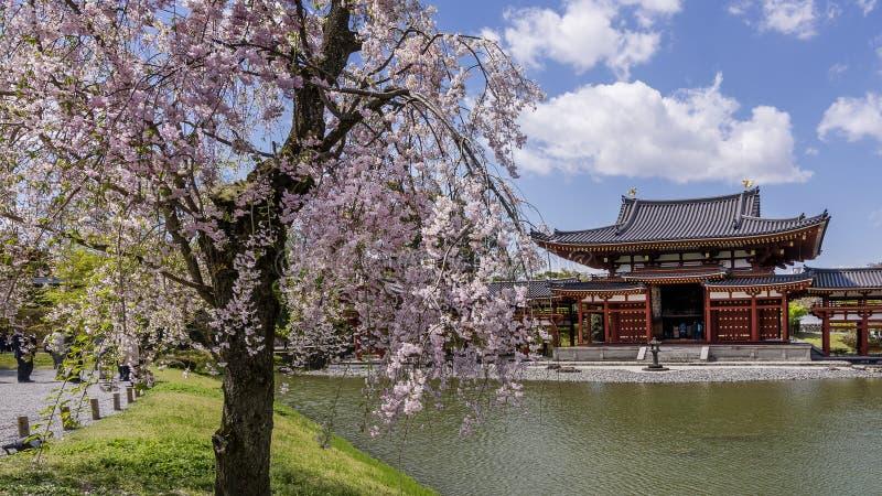 Blühender Baum an Byodo-im Tempel in Uji, Jahreszeit Kyotos, Japan im Frühjahr stockbild