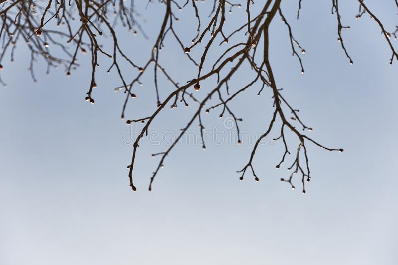 Blühender Baum im Frühjahr lizenzfreie stockfotos