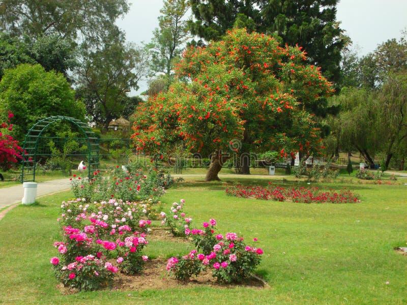 Blühender Garten lizenzfreie stockfotografie