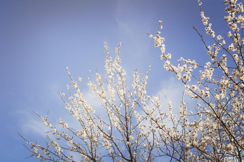 Blühender Garten Nahaufnahmeblumen auf Baum gegen blauen Himmel junge gelbe Blume gegen weißen Hintergrund lizenzfreie stockbilder