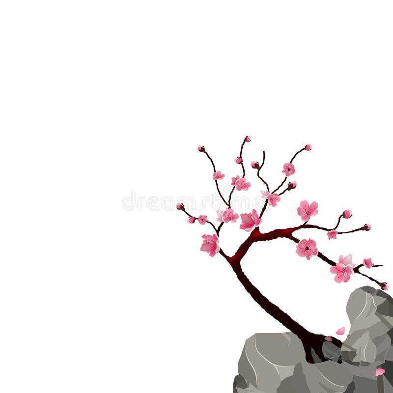 Blühender Japaner Kirschblüte Rosa Kirschbaum auf einer Klippe Getrennt auf weißem Hintergrund Abbildung vektor abbildung