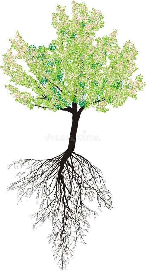 bl hender kirschbaum mit wurzeln vektor abbildung illustration von wachstum stadt 42114557. Black Bedroom Furniture Sets. Home Design Ideas