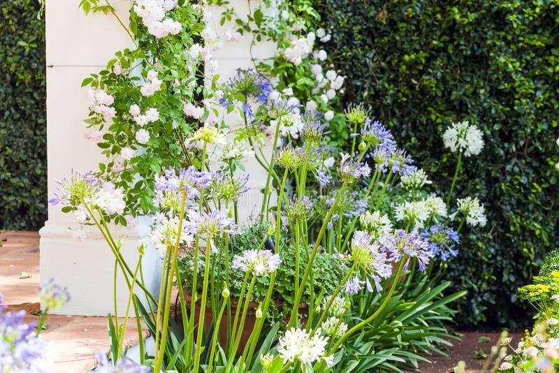 Blühender Lauch in einem schönen Garten stockfotografie