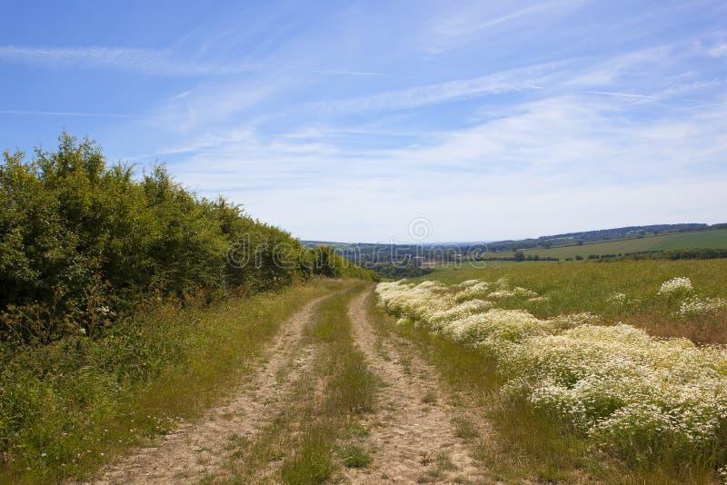 Blühender Mayweed und Hecken durch einen trockenen Feldweg in der Sommerzeit lizenzfreies stockfoto