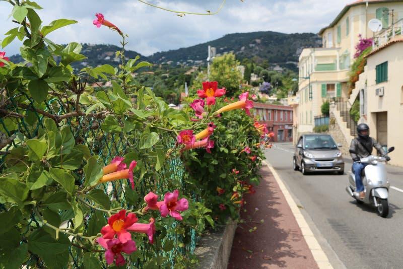 Blühender rosafarbener Strauch Weigela der alten Stadt stockbild