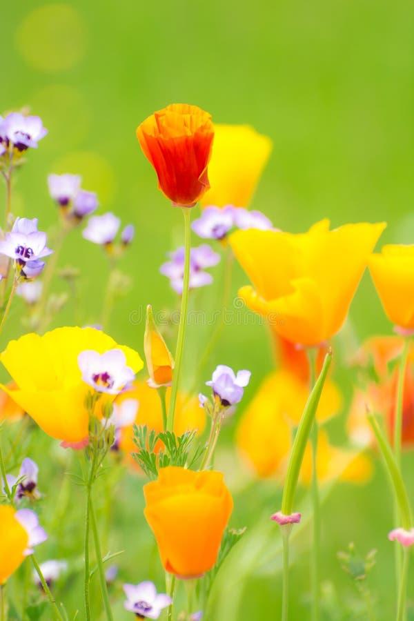 Blühender Sommer Medow stockbild