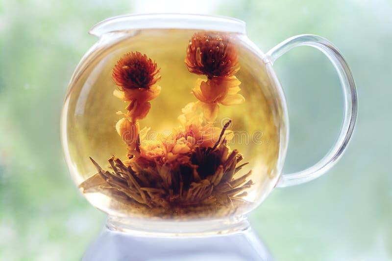 Blühender Tee in einer Glasteekanne stockfotos