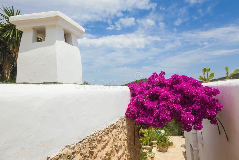Blühendes Bouganvilla stockbild