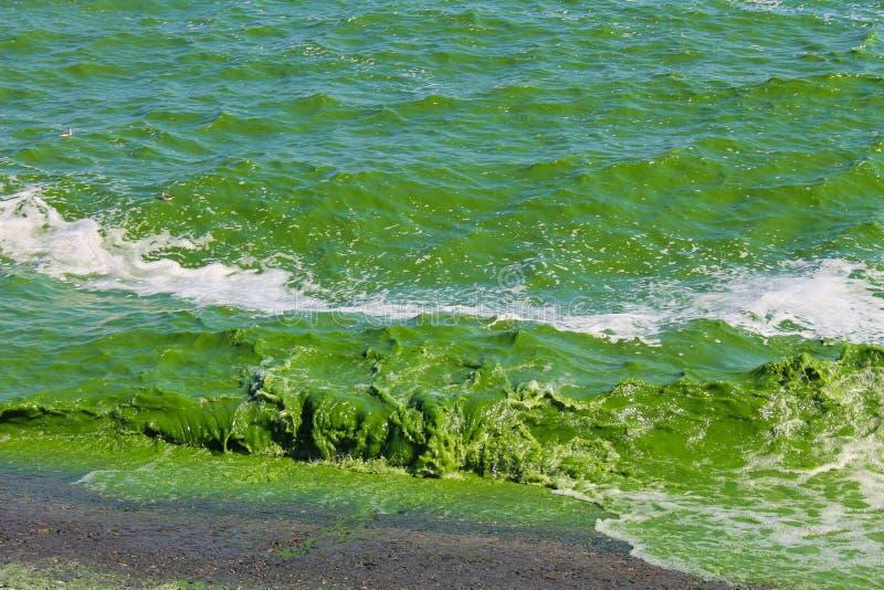 Blühendes grünes Wasser lizenzfreie stockfotografie