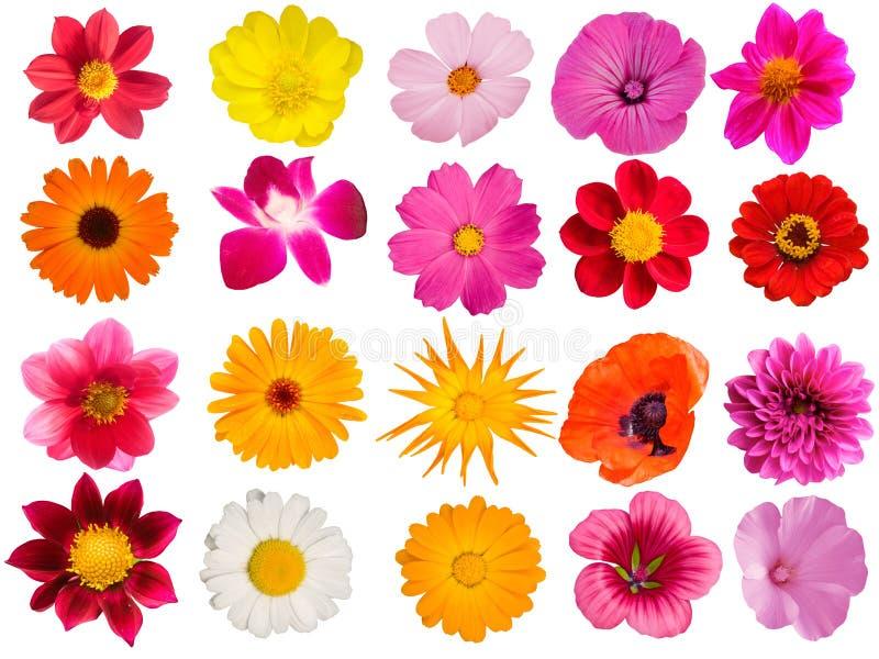Blüht dekorative Ansammlung stockbilder
