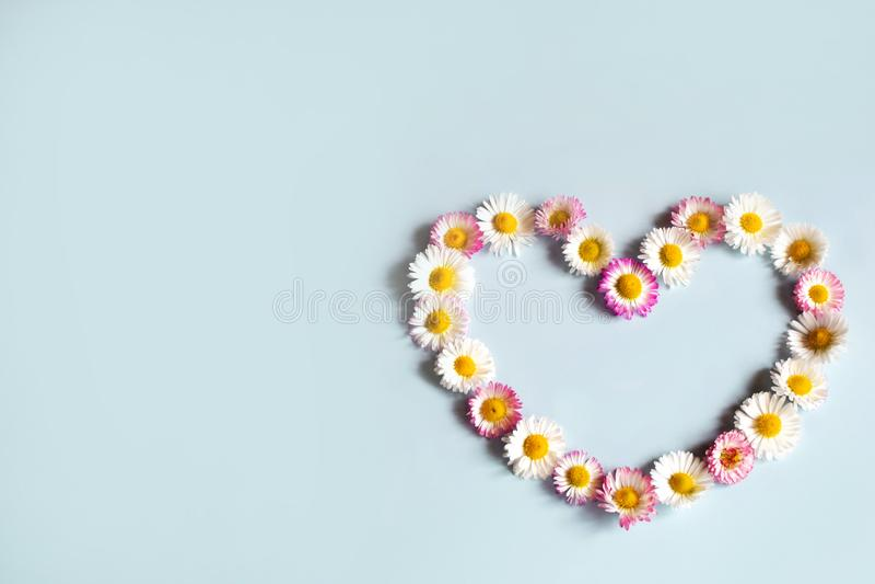 Blüht Gänseblümchen in Form des Herzens stockbilder
