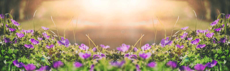 Blüht Glocken des Feldhintergrundes Ist ein grünes Feld voll der Weizenanlagen tonen stockbilder