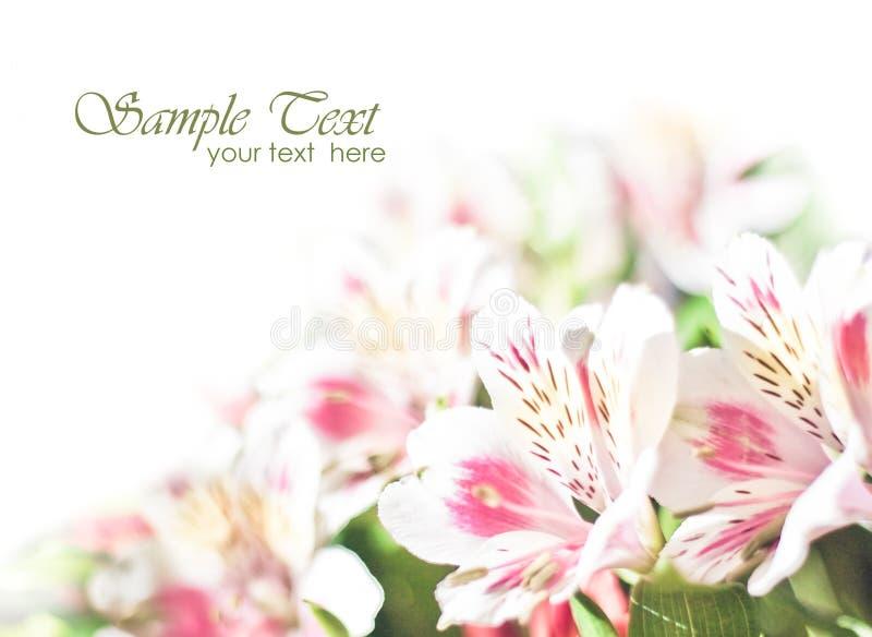 Blüht Hintergrund stock abbildung