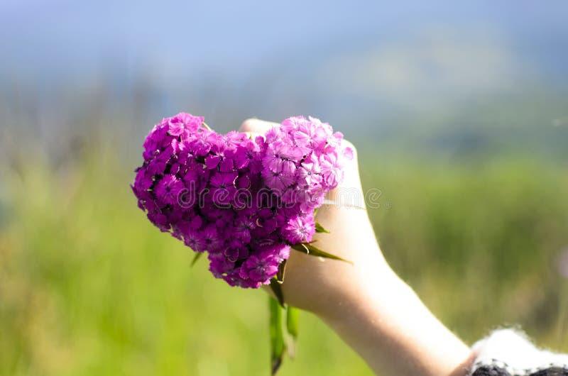 Blüht Inneres stockbild