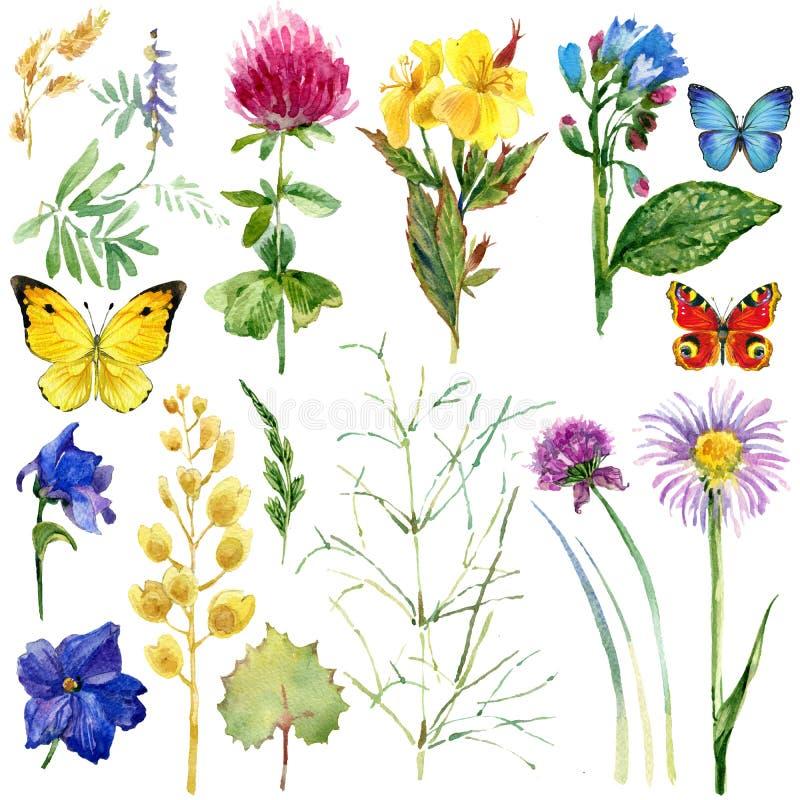 Blüht ländliches Kraut Feld des Sommers und Schmetterlingshintergrund Dekoratives Bild einer Flugwesenschwalbe ein Blatt Papier i lizenzfreie abbildung