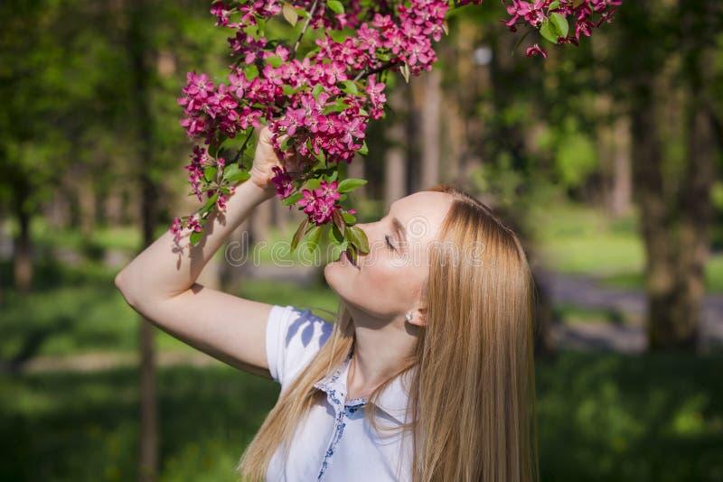 Blüht riechendes ` Apfelbäume der schönen blonden Frau Mädchen und blühender Apfelbaum Frühlingszeit mit Baumblumen lizenzfreie stockfotos