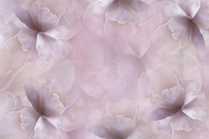 Blüht rosa-violetten Hintergrund Purpurrot-weiße große Blumenblattblumentulpe Blumencollage Tulpen und Winde auf einem weißen Hin lizenzfreie stockbilder