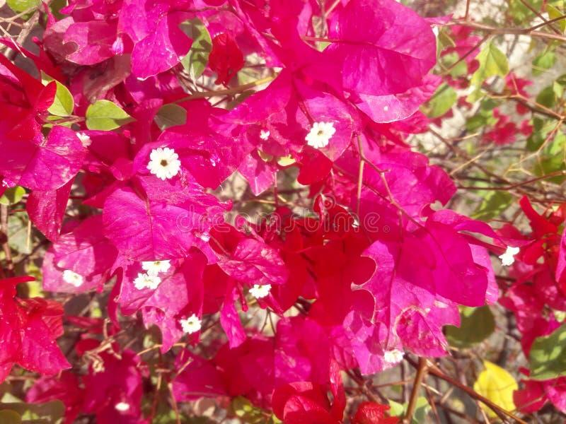 Blüht Schönheit lizenzfreie stockfotografie
