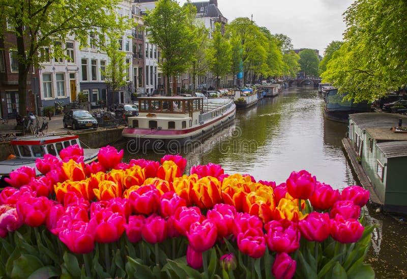 bl ht tulpen in amsterdam redaktionelles stockfotografie bild von tulpen 93252602. Black Bedroom Furniture Sets. Home Design Ideas