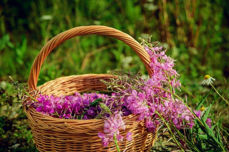 Blüht Weidenteeblumen in einem Korb auf dem Gras lizenzfreies stockfoto