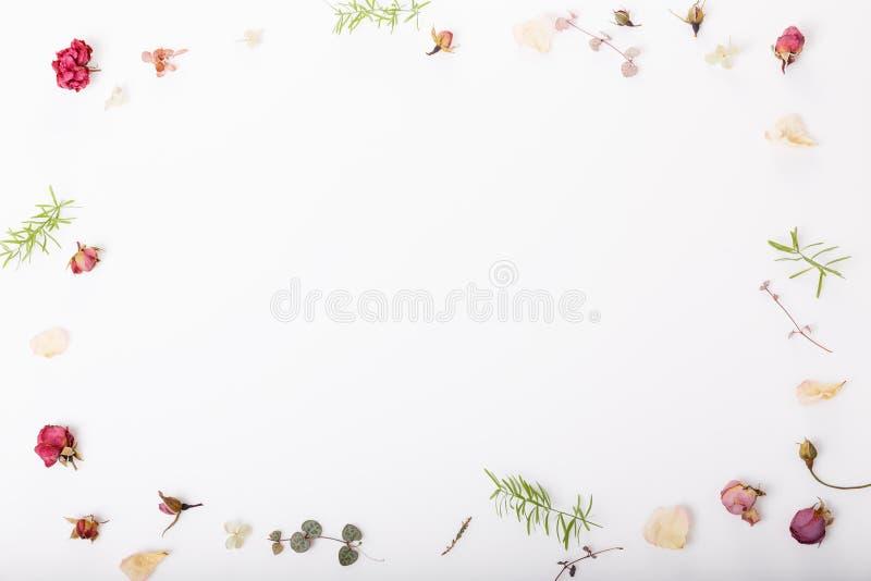 Blüht Zusammensetzung Feld gemacht von getrockneten rosafarbenen Blumen auf weißem Hintergrund Flache Lage, Draufsicht, Kopienrau stockbilder
