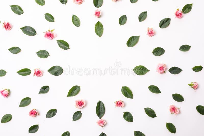 Blüht Zusammensetzung Feld mit rosafarbenen Blumen und Eukalyptusniederlassungen Flache Lage, Draufsicht stockfoto