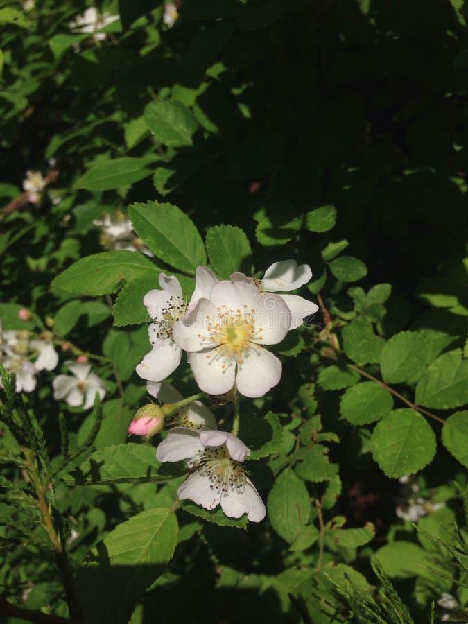 Blüte stockbild