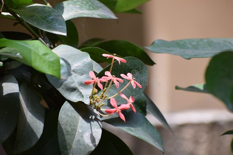 Blüte auf einem Blatt lizenzfreie stockfotos