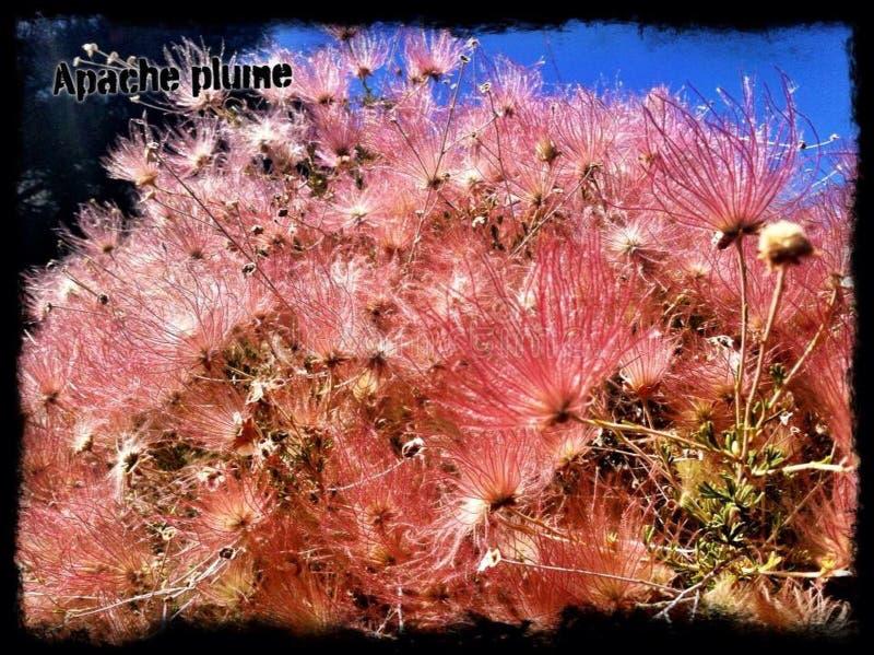 Blüte der Südkante stockbilder