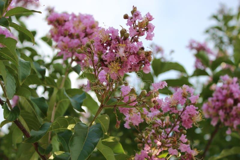 Blüte, in der Sie gepflanzt werden lizenzfreie stockfotografie